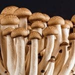 Medicine and Miracles in Mushrooms