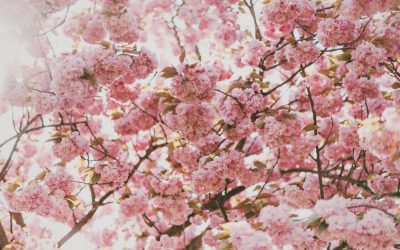 Fighting Seasonal Allergies Naturally